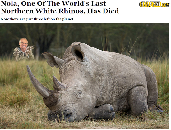 Nola, One Of The World's Last CRACKED OON Northern White Rhinos, Has Died Now there are just three left on the planet.