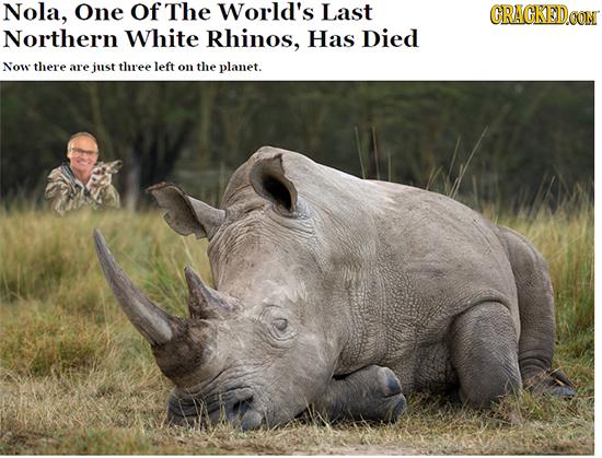 15 Stories We Wish News Headlines Were Telling - [11/29]