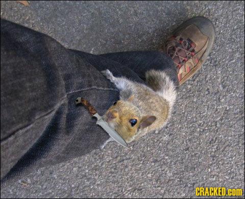 When (Adorable) Animals Attack