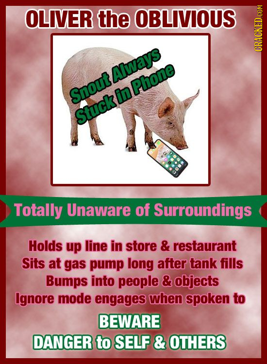 OLIVER the OBLIVIOUS CRAuh Always Phone Snout in Stuck Totally Unaware of Surroundings Holds up line in store & restaurant Sits at gas pump long after