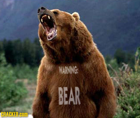 WARNING: BEAR CRACKED COM