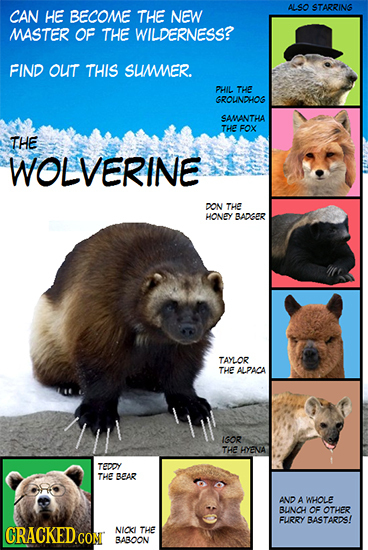 ALSO STARRING CAN HE BECOME THE NEW MASTER OF THE WILDERNESS? FIND out THIS SUMER. PHIL THE GROUNDHOG SAMANTHA THE FOX THE WOLVERINE DON THE HONEY BAD
