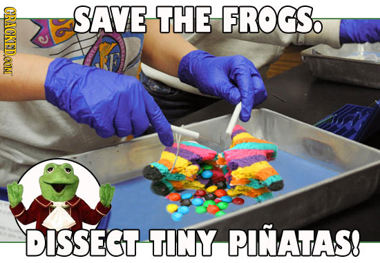 CRACKEDCON SAVE THE FROGS. DISSECT TINY PINATAS!