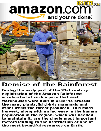 ORAGKEDO amazon.com and you're done. Demise of the Rainforest During the early part of the 21st century exploitation of the Amazon Rainforest accelera