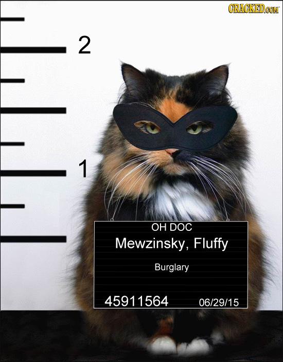 CRACKEDCON 2 1 OH DOC Mewzinsky, Fluffy Burglary 45911564 06/29/15