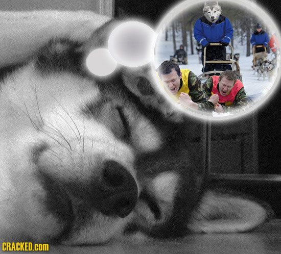 What Our Pets Are Probably Dreaming About