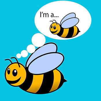 I'm a...