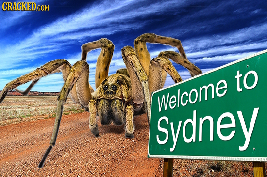 CRACKEDCO to Sydney Welcome