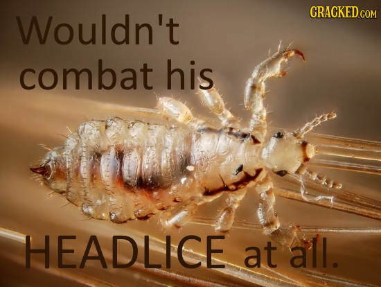 Wouldn't combat his HEADLICE at all.