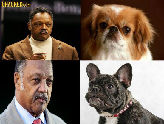 20 Celebrities Who Have Creepy Animal Lookalikes