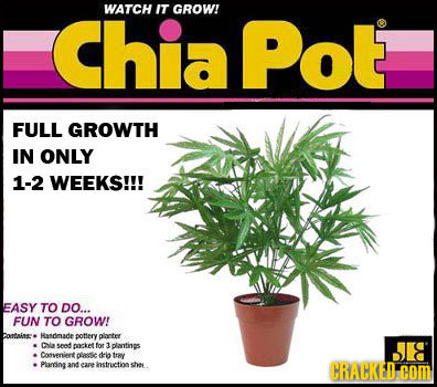WATCH IT Chia Pot GROW! FULL GROWTH IN ONLY 1-2 WEEKS!!! EASY TO DO... FUN TO GROW! bontaae Hasdruade pottery plarter Cla send oocketfot 2 plantins Co