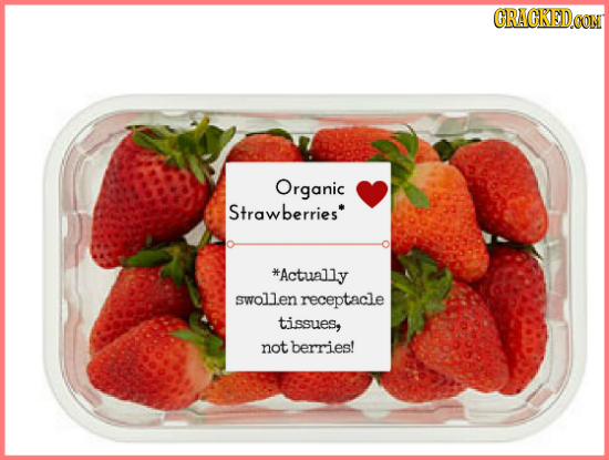 GRAGKEDO CON Organic Strawberries *Actually swollen receptacle tissues, not berries!
