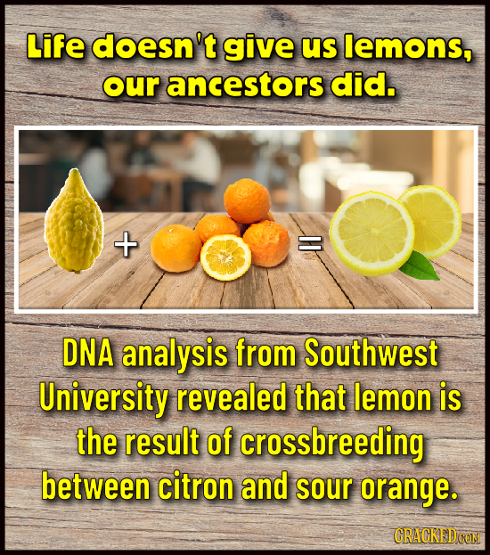Life doesn't give us lemons, our ancestors did. X DNA analysis from Southwest University revealed that lemon is the result of crossbreeding between ci
