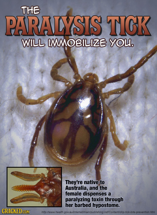 THE PARALYSIS TICK WILL IMMOBILIZE you. They're native to Australia, and the female dispenses a paralyzing toxin through her barbed hypostome. CRACKED