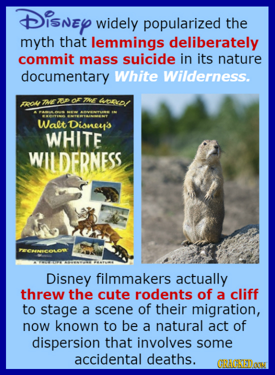 Disney widely popularized the myth that lemmings deliberately commit mass suicide in its nature documentary White Wilderness. FROL INE 7op or THE WpRd