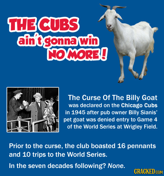 THE CUBS ain t gonna win NO MORE! The Curse Of The Billy Goat was declared on the Chicago Cubs in 1945 after pub owner Billy Sianis' pet goat was deni