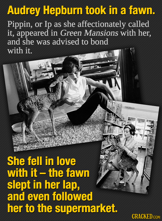 Audrey Hepburn took in a fawn. Pippin, or Ip as she affectionately called it, appeared in Green Mansions with her, and she was advised to bond with it