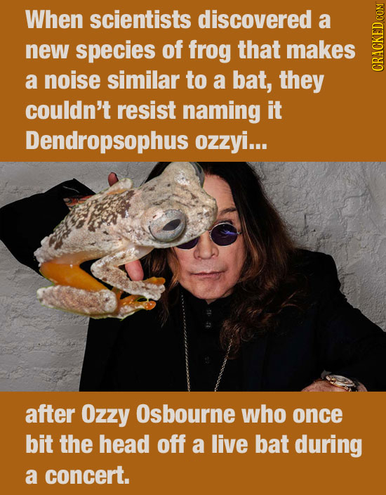 When scientists discovered a new species of frog that makes a noise similar to a bat, they CRAUN couldn't resist naming it Dendropsophus ozzyi... afte