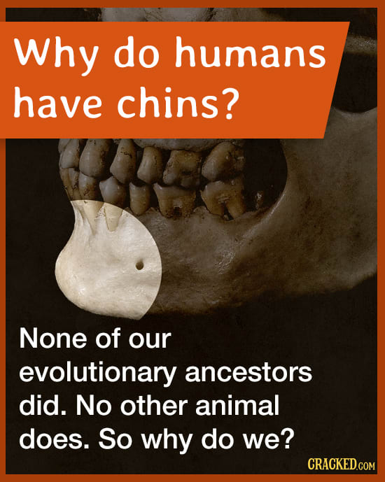 Why Do Humans Have Chins?