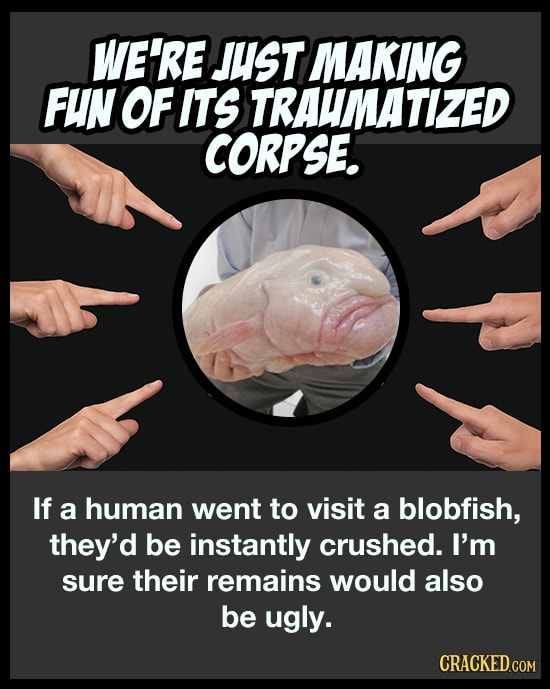The Real Story Behind The Ugliest Fish On The Internet