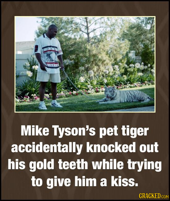 Mike Tyson's pet tiger accidentally knocked out his gold teeth while trying to give him a kiss. CRACKED