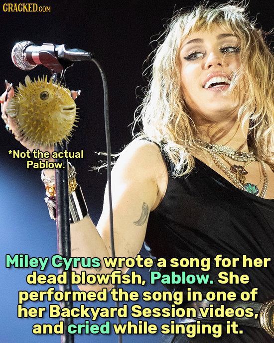 CRACKEDcO *Not the actual Pablow. Miley Cyrus wrote a song for her dead blowfish, Pablow. She performed the song in one of her Backyard Session videos