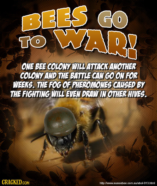 23 Horrifying Real Insects That Put Science Fiction to Shame
