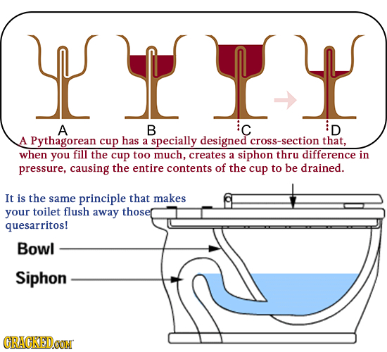 IT A B C D A Pythagorean cup has a specially designed cross-section that, when you fill the cup too much, creates siphon difference a thru in pressure