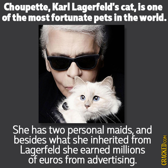 Choupette, Karl Lagerfeld's cat, is one of the most fortunate pets in the world. She has two personal maids, and besides what she inherited from Lager