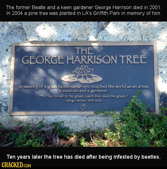 The former Beatle and a keen gardener George Harrison died in 2001. In 2004 a pine tree was planted in LA'S Griffith Park in memory of him. THE GEORGE
