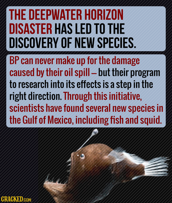 THE DEEPWATER HORIZON DISASTER HAS LED TO THE DISCOVERY OF NEW SPECIES. BP can never make up for the damage caused by their oil spill- but their progr