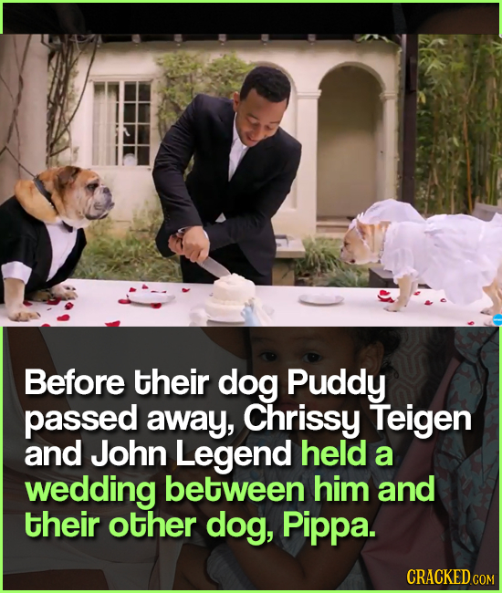 Before their dog Puddy passed away, Chrissy Teigen and John Legend held a wedding between him and their other dog, Pippa. CRACKED COM