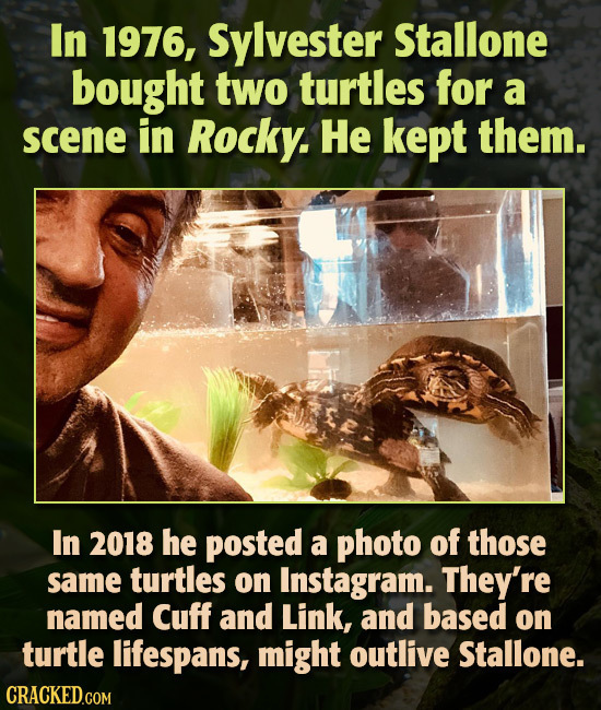 In 1976, Sylvester Stallone bought two turtles for a scene in Rocky. He kept them. In 2018 he posted a photo of those same turtles on Instagram. They'