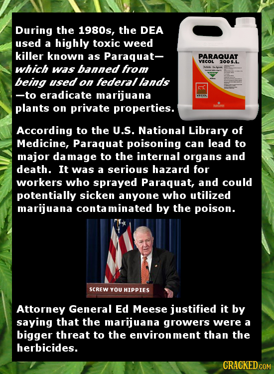 During the 1980s, the DEA used a highly toxic weed killer known as Paraquat- PARAQUAT VECOL 200 5.. which was banned from being used on federal lands