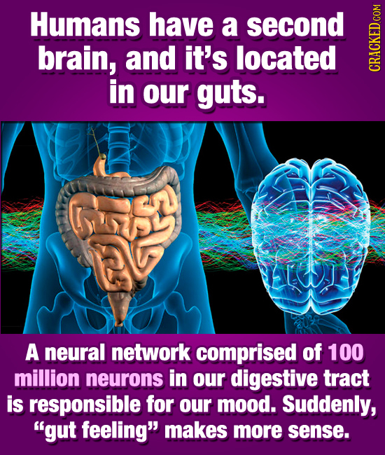 Humans have a second brain, and it's located in guts. CRACH our A neural network comprised of 100 million neurons in our digestive tract is responsibl
