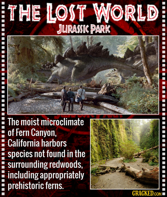 THE LOST WORLD JURASSIC PARK The moist microclimate of Fern Canyon, California harbors species not found in the surrounding redwoods, including approp