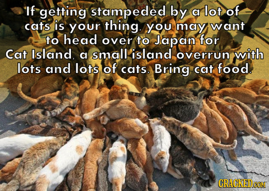 If getting stampeded by a lot of cats is your thing. you may want to head over to Japan for Cat Island, small island with a overrun lots and lots of c
