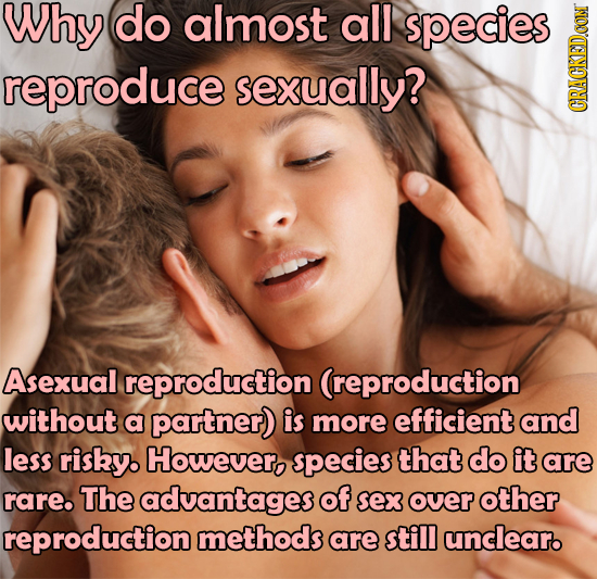 Why do almost all species reproduce sexually? GRAUN Asexual I reproduction (reproduction without a partner) is more efficient and less risky However,