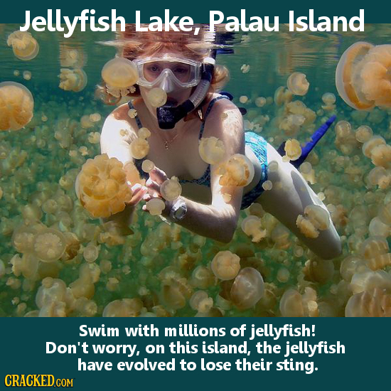 Jellyfish Lake, Palau Island Swim with millions of jellyfish! Don't worry, on this island, the jellyfish have evolved to lose their sting.