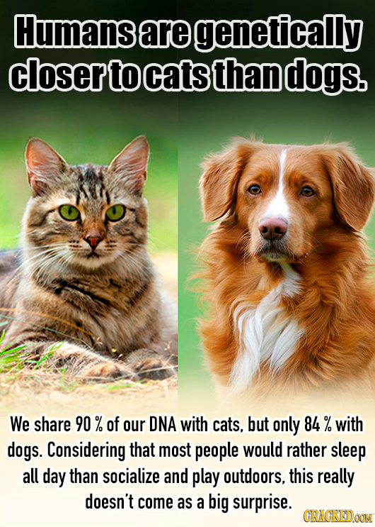 Humans are genetically closer to cats than dogs. We share 90 % of our DNA with cats, but only 84% with dogs. Considering that most people would rather