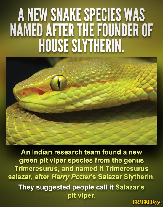 A NEW SNAKE SPECIES WAS NAMED AFTER THE FOUNDER OF HOUSE SLYTHERIN. An Indian research team found a new green pit viper species from the genus Trimere