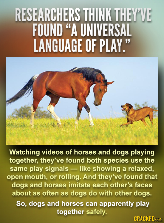 RESEARCHERS THINK THEY'VE FOUND A UNIVERSAL LANGUAGE OF PLAY. Watching videos of horses and dogs playing together, they've found both species use th