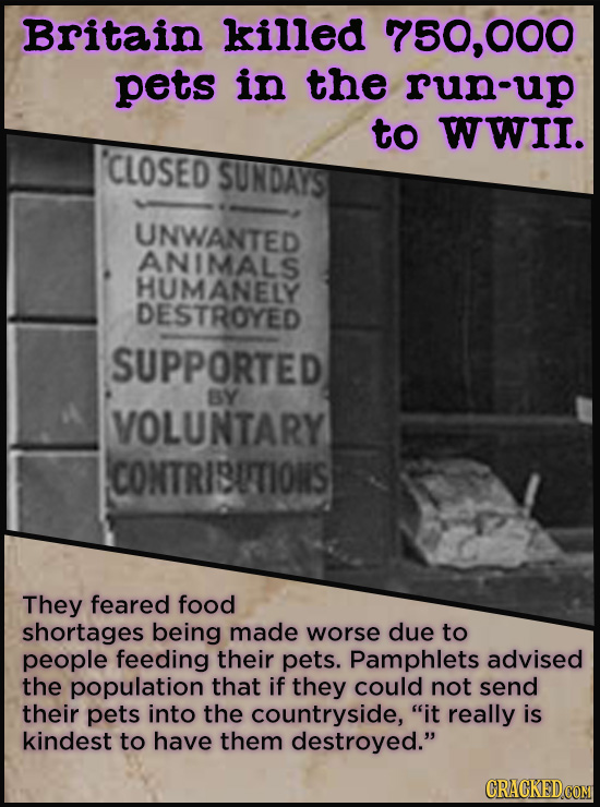 Britain killed 750,000 pets in the run-up to WWII. 'CLOSED SUNDAYST UNWANTED ANIMALS HUMANELY DESTROYED SUPPORTED BY VOLUNTARY CONTRISUTIONS They fear