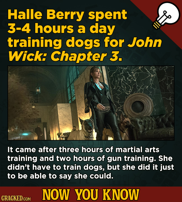13 Surprising Facts About Movies (And A Ton Of Other Things) - Halle Berry spent 3-4 hours a day training dogs for John Wick: Chapter 3. It came