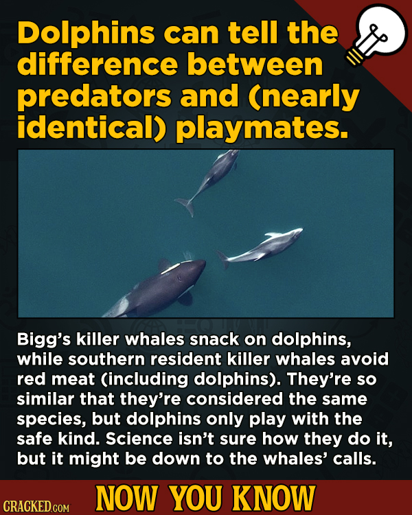13 Surprising Facts About Movies (And A Ton Of Other Things) - Dolphins can tell the difference between predators and (nearly identical) playmates.