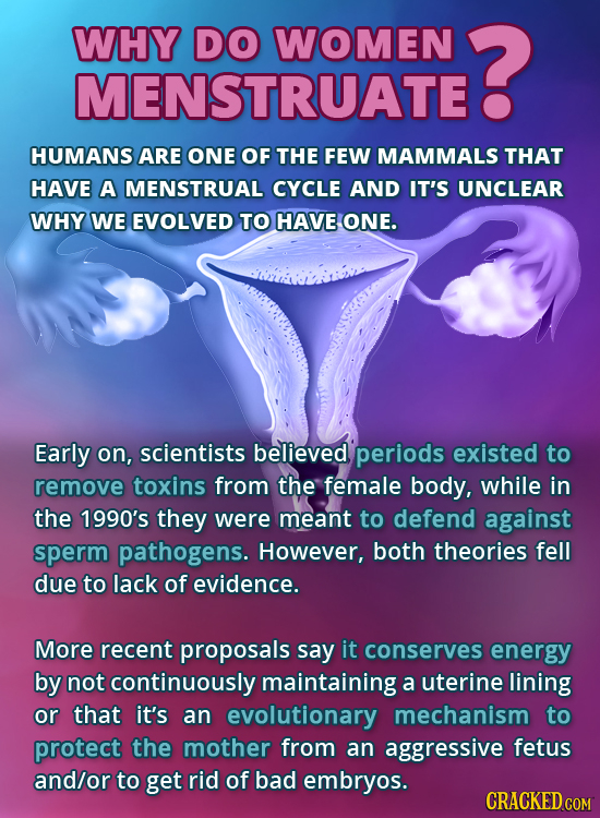 WHY DO WOMEN ? MENSTRUATEE HUMANS ARE ONE OF THE FEW MAMMALS THAT HAVE A MENSTRUAL CYCLE AND IT'S UNCLEAR WHY WE EVOLVED TO HAVE ONE. Early on, scient