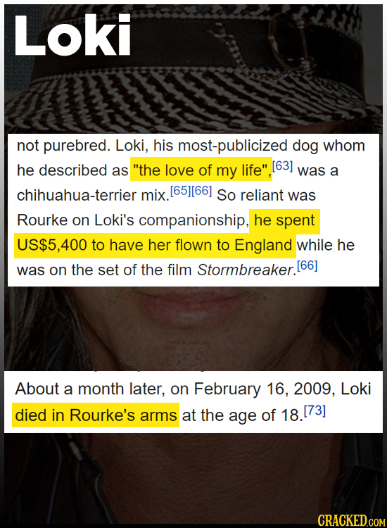 Loki not purebred. Loki, his most-publicized dog whom he described as the love of my life [63] was a chihuahua-terrier mix. [65][66] So reliant was