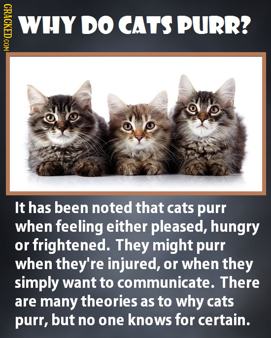 CRACKED.COM WHY DO CATS PURR? It has been noted that cats purr when feeling either pleased, hungry or frightened. They might purr when they're injured