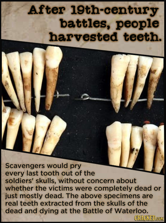 After 19th-century battles, people harvested teeth. Scavengers would pry every last tooth out of the soldiers' skulls, without concern about whether t