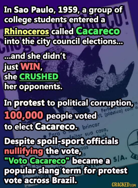 In Sao Paulo, 1959, a group of college students entered a Rhinoceros called Cacareco into the city council elections... c..and she didn't just WIN, sh